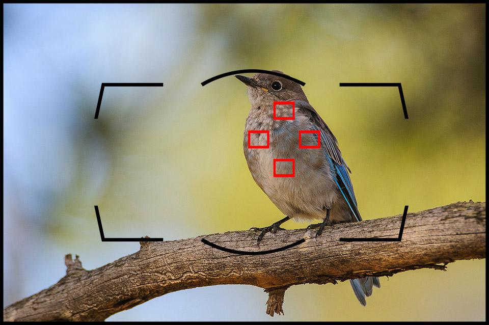 Chế độ lấy nét theo vùng của Nikon