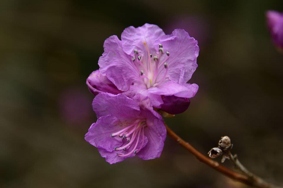 Nghệ thuật chụp ảnh hoa